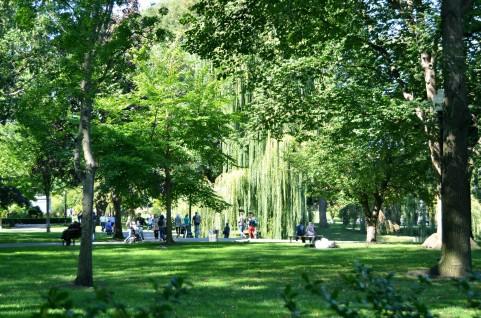 森林2.jpg